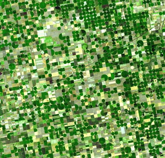 Satellite image of crops in Kansas on center-pivot irrigation farms. (Wikipedia Commons, 2006)