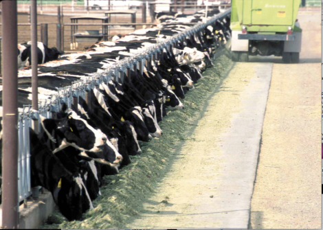 Dairy CAFO (NRCS.USDA.gov)