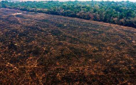 Burned areas of the Amazon rainforest, near Porto Velho, Rondonia state, Brazil, on August 24. CARLOS FABAL AFP GETTY IMAGES